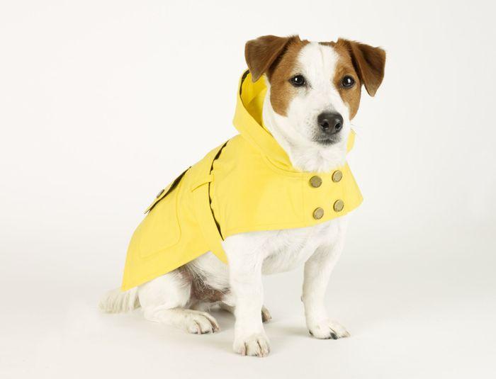 Trends 10 Stylish Dog Raincoats And Waterproofs
