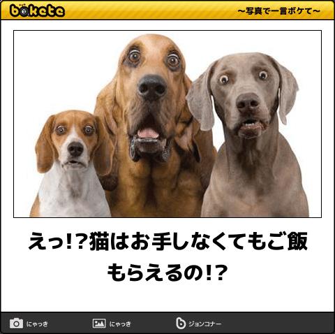 爆笑 こんなの絶対に笑ってしまう イヌ画像でボケてが面白すぎる 57枚 犬のトレーニング イヌ 面白い動物