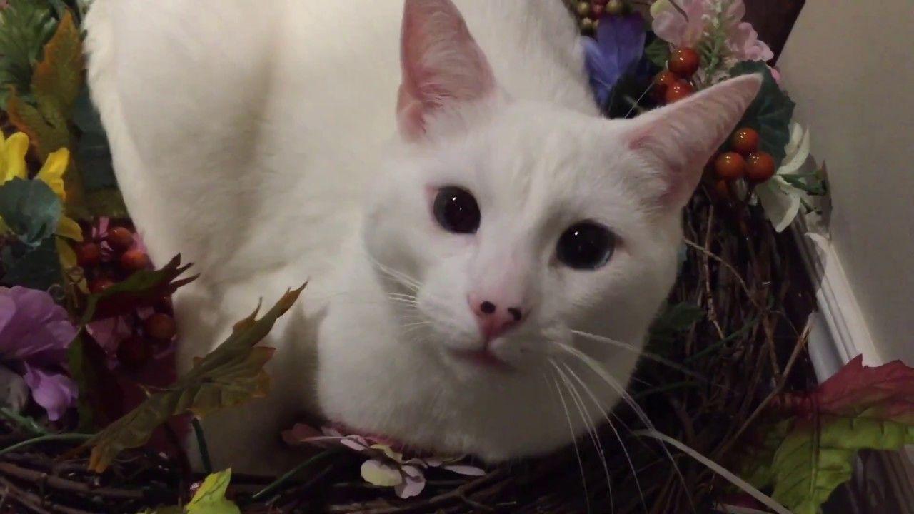 Fluffy kittens - Пушистые котята - Chatons moelleux