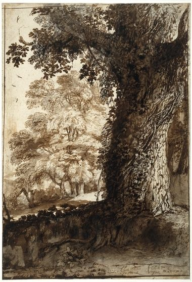 Claude Lorrain Study Of An Oak Tree Black Chalk With Pen And