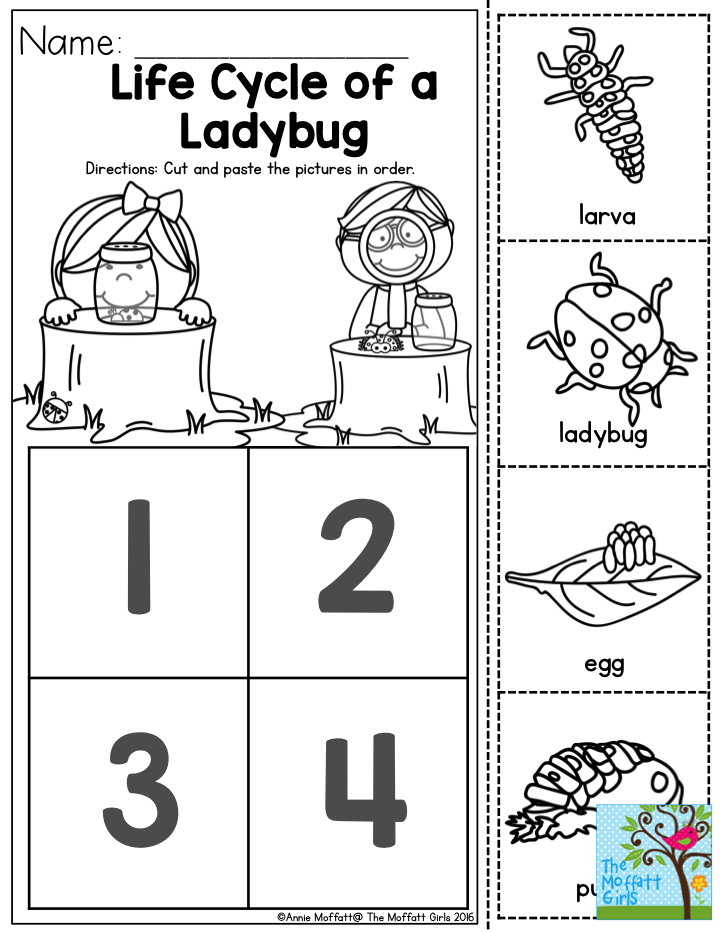 Life Cycle of a Ladybug- This one is sure to be a favorite preschool ...