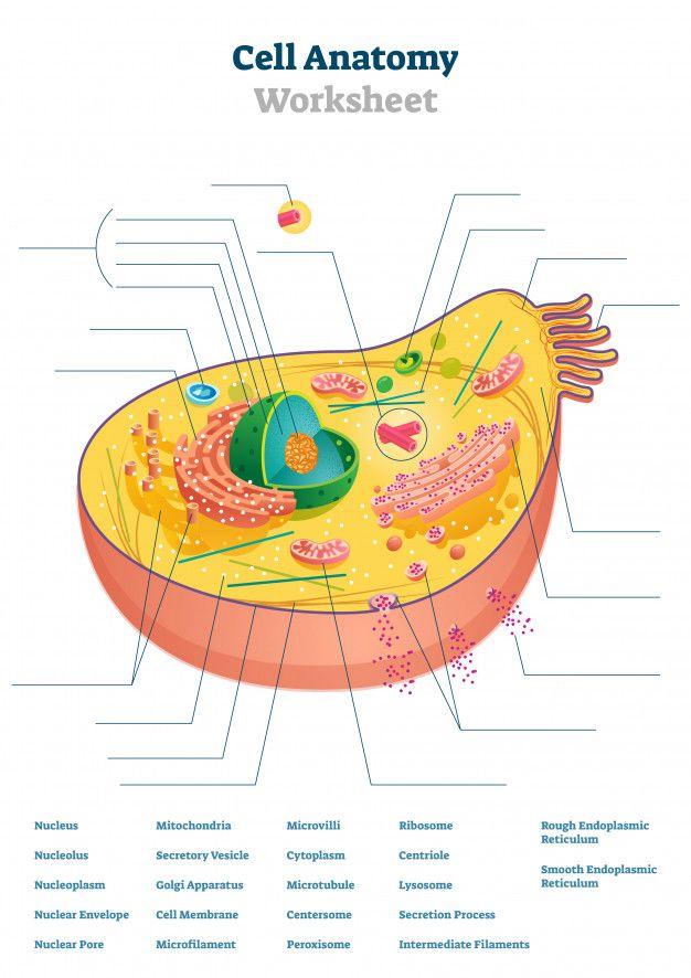 Cell Anatomy Worksheet Illustration in 2020 | Kids ...