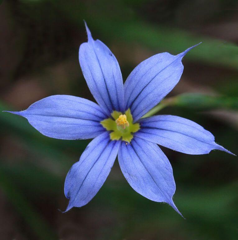 70 beautiful purple flowers care growing tips