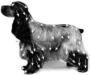 Toelettatura Cocker ~ Spaniel grooming diagram doggonit pinterest diagram dog and
