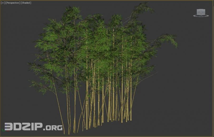 3d bamboo model 1 free download Bamboo, Free download