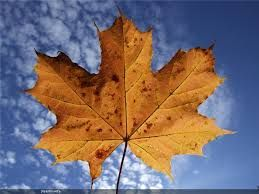 نتيجة بحث الصور عن صور لتزيين الصفوف الصغيرة للاطفال عن فصل الخريف Abstract Artwork Plant Leaves Artwork