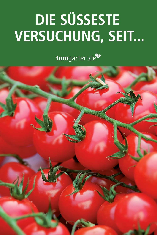 Es Tomaten Gibt Tomaten Gemuse Tomatensorten