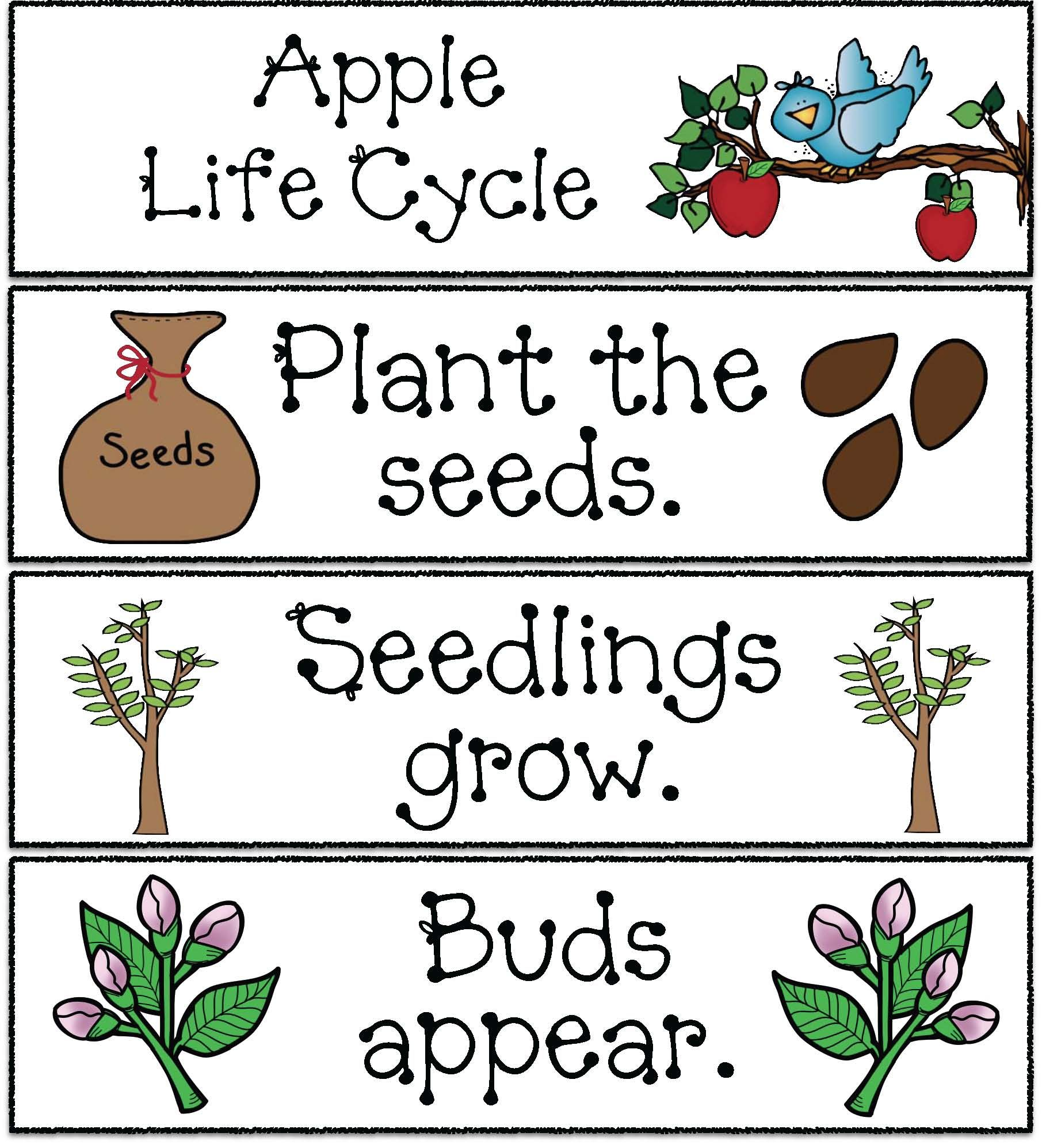 Life Cycle Of An Apple Activities