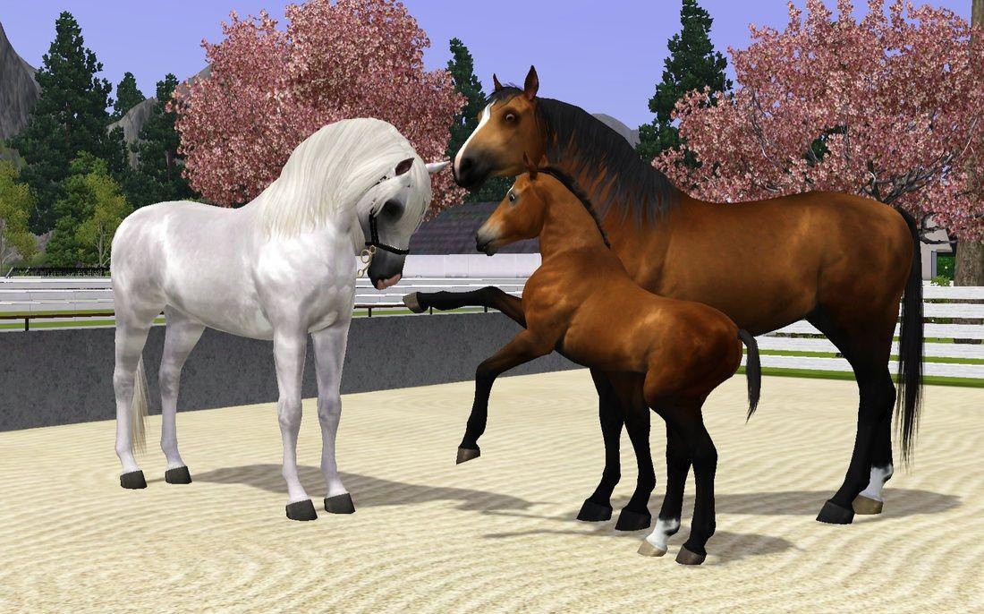 Sims 3 Horses Jumping | Siglavy Linnea x NW's Little Daisy