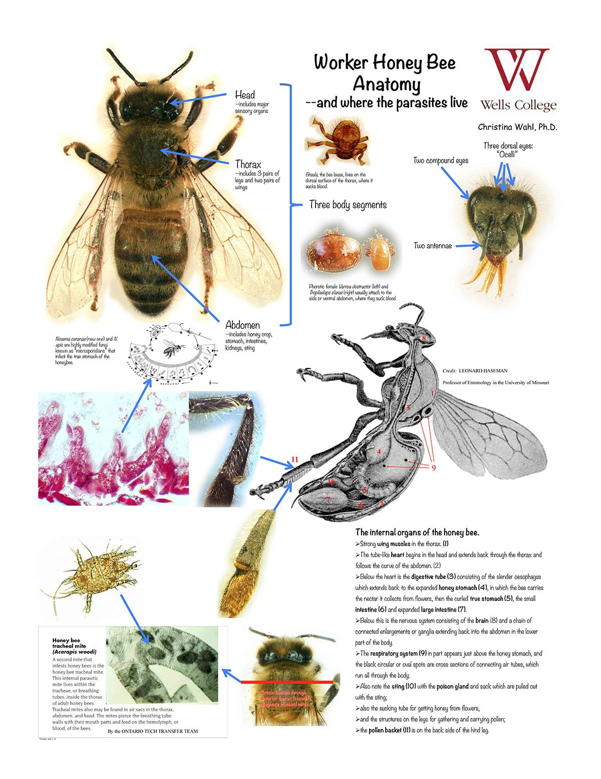 Bee charts | Important Bee Charts | Pinterest | Bees