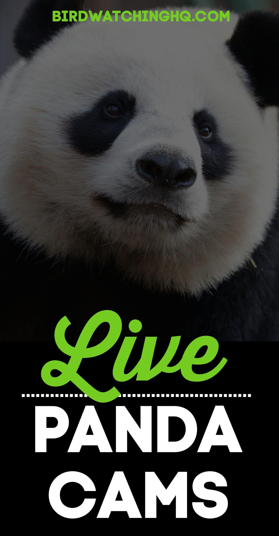 Pin On Live Animal Cameras