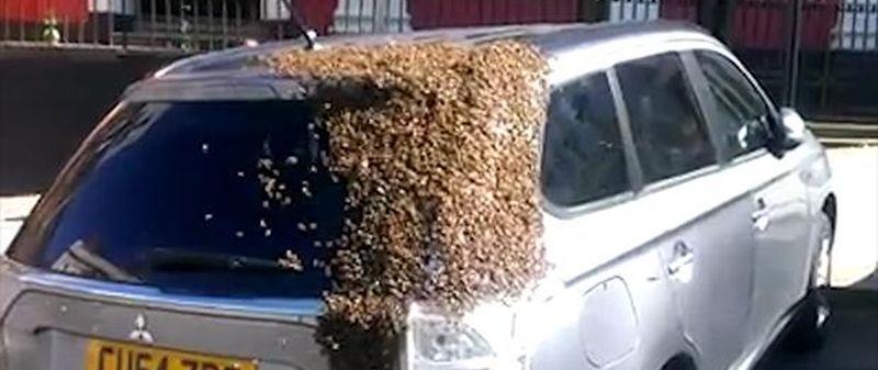 Ein Schwarm Bienen verfolgte für mehr als 24 Stunden ein Auto, um ihre Königin zu retten, weiss The Telegraph zu berichten: Carol Howarth, 65, was amazed when a swarm of over 20,000 insects flew down onto her silver Mitsubishi Outlander, covering the back end of the vehicle. A team of three beekeepers, a national park [ ]