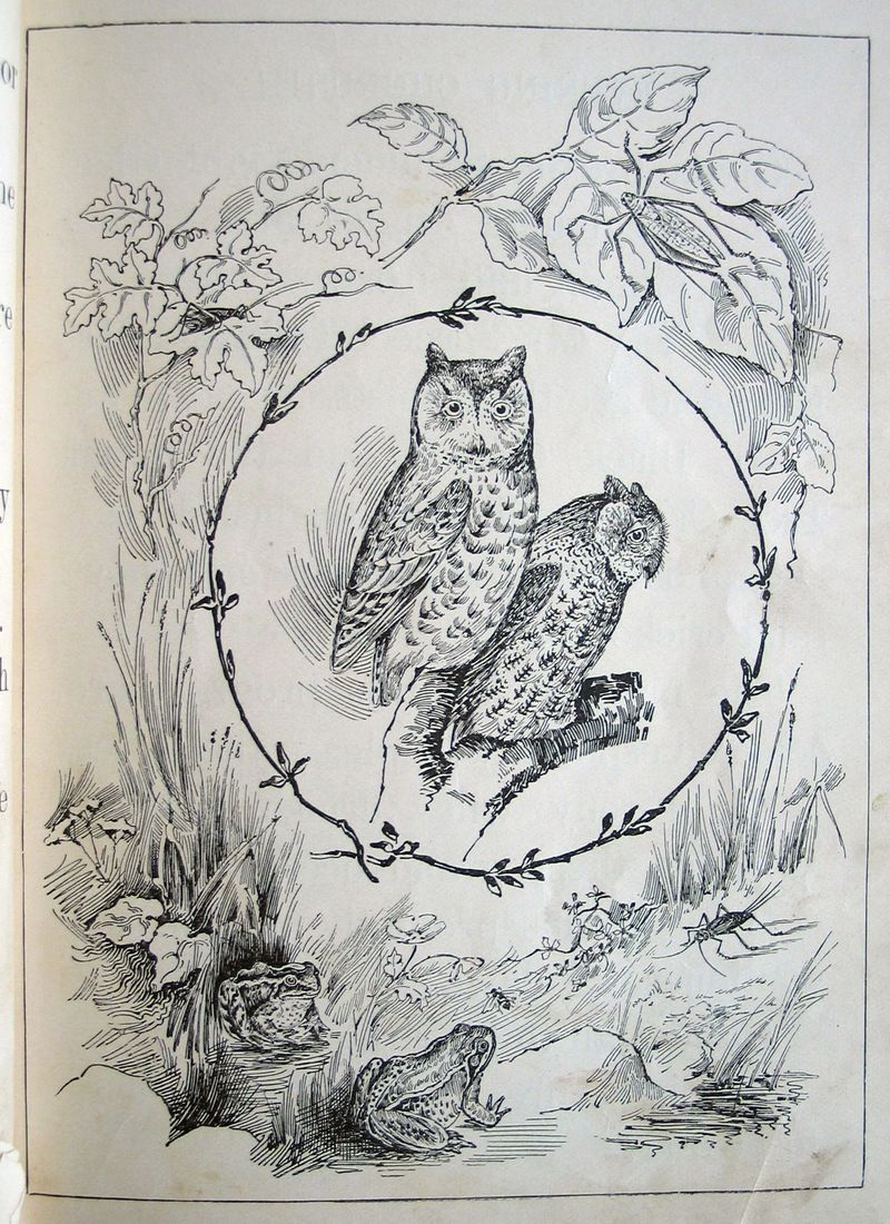 Owl coloring page. | Dh - ART to COLOR | Pinterest | Owl, Adult ...