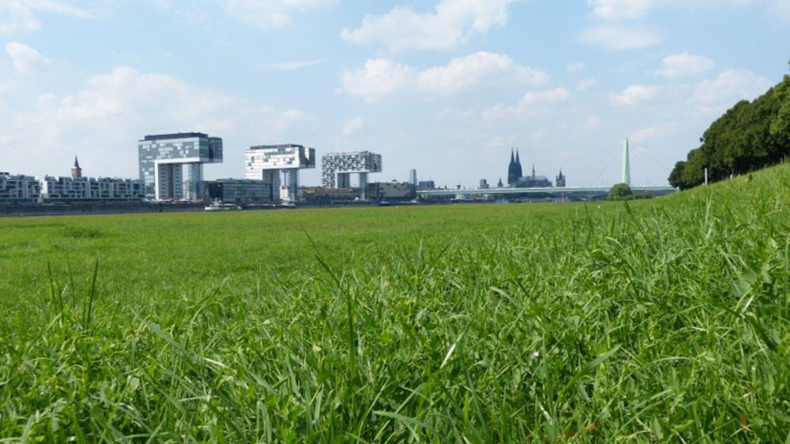 Kölntipp: Die 8 schönsten Grünflächen in Köln