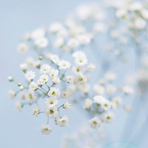 Light Blue Photography