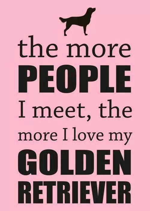 I Love My Golden Retriever Golden Retriever Retriever Golden