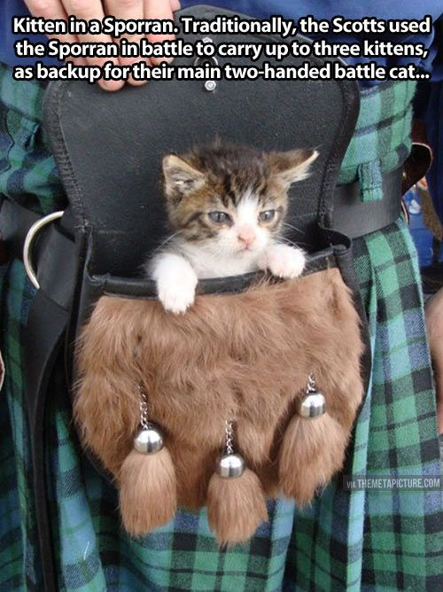 Battle kitten… | Horde much     ? | Cats, Kittens cutest, Kittens