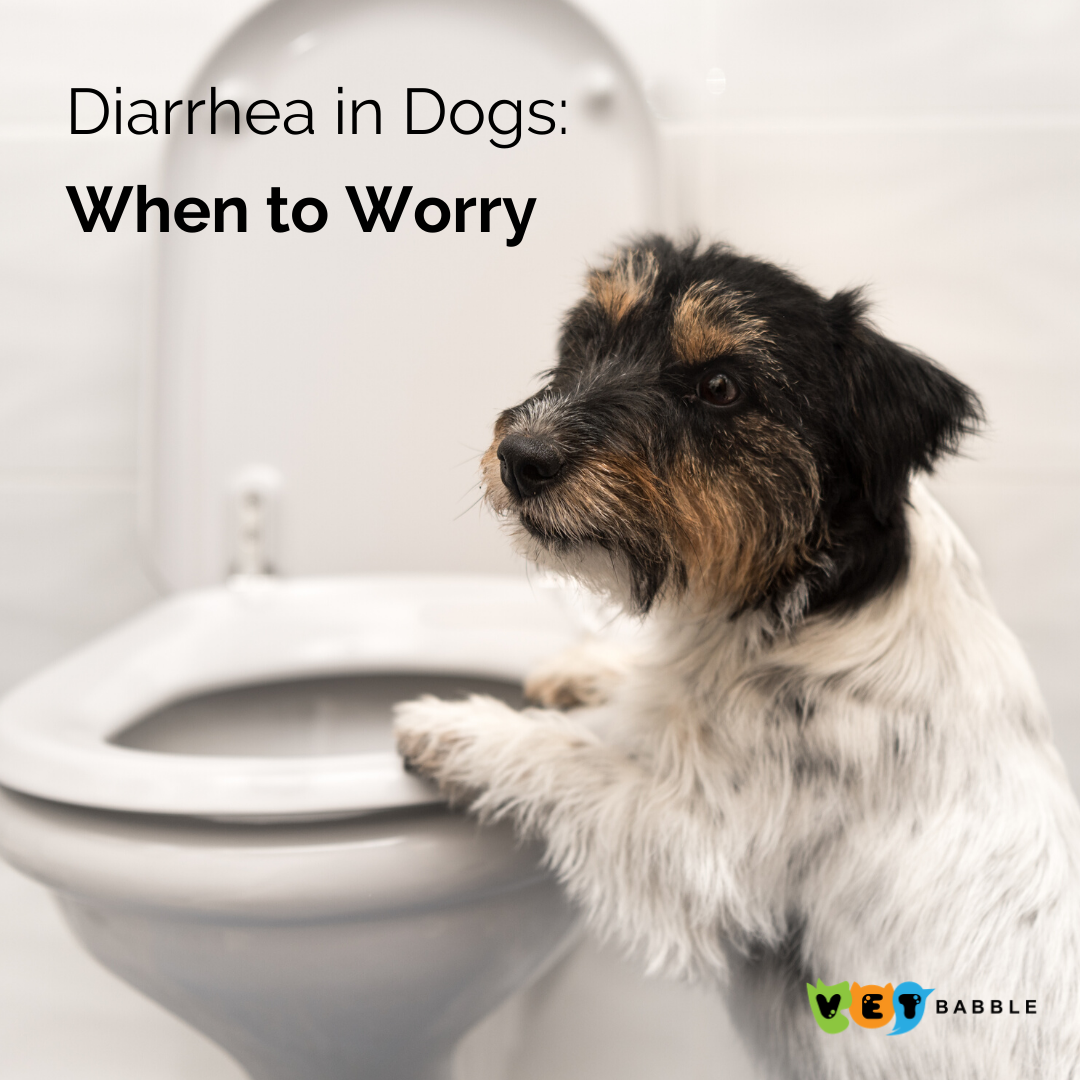 Preparing For Natural Disaster Or Emergency With Pets Diarrhea