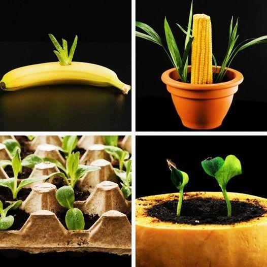 Easy growing plant hacks for your inner gardener ���