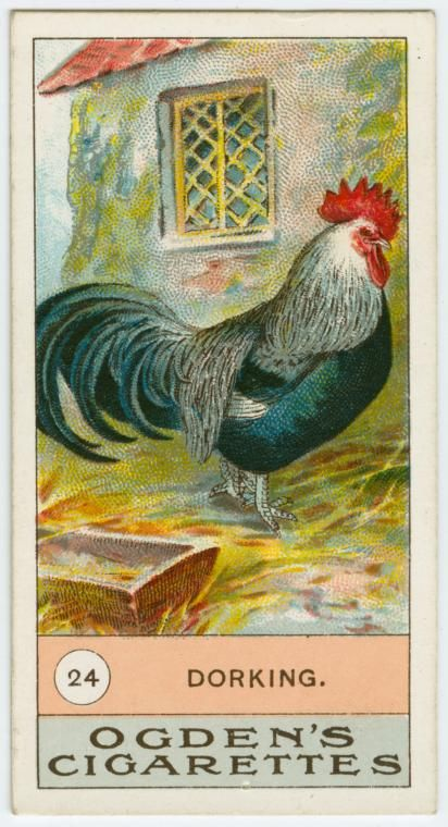 Fowls, pigeons & dogs