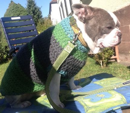 Häkelpulli für den Hund oder häkelteppiche aus Recigling