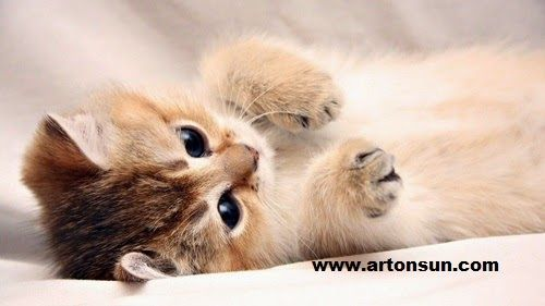 Art On Sun Cat Kittens Cutest Baby Cats Kitten Wallpaper