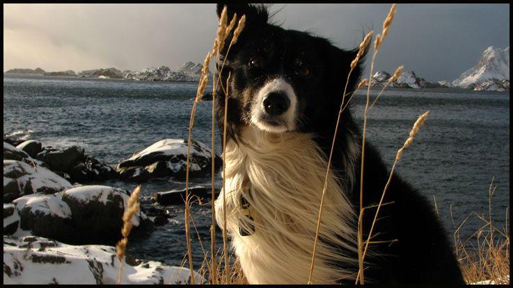 My dog Loki
