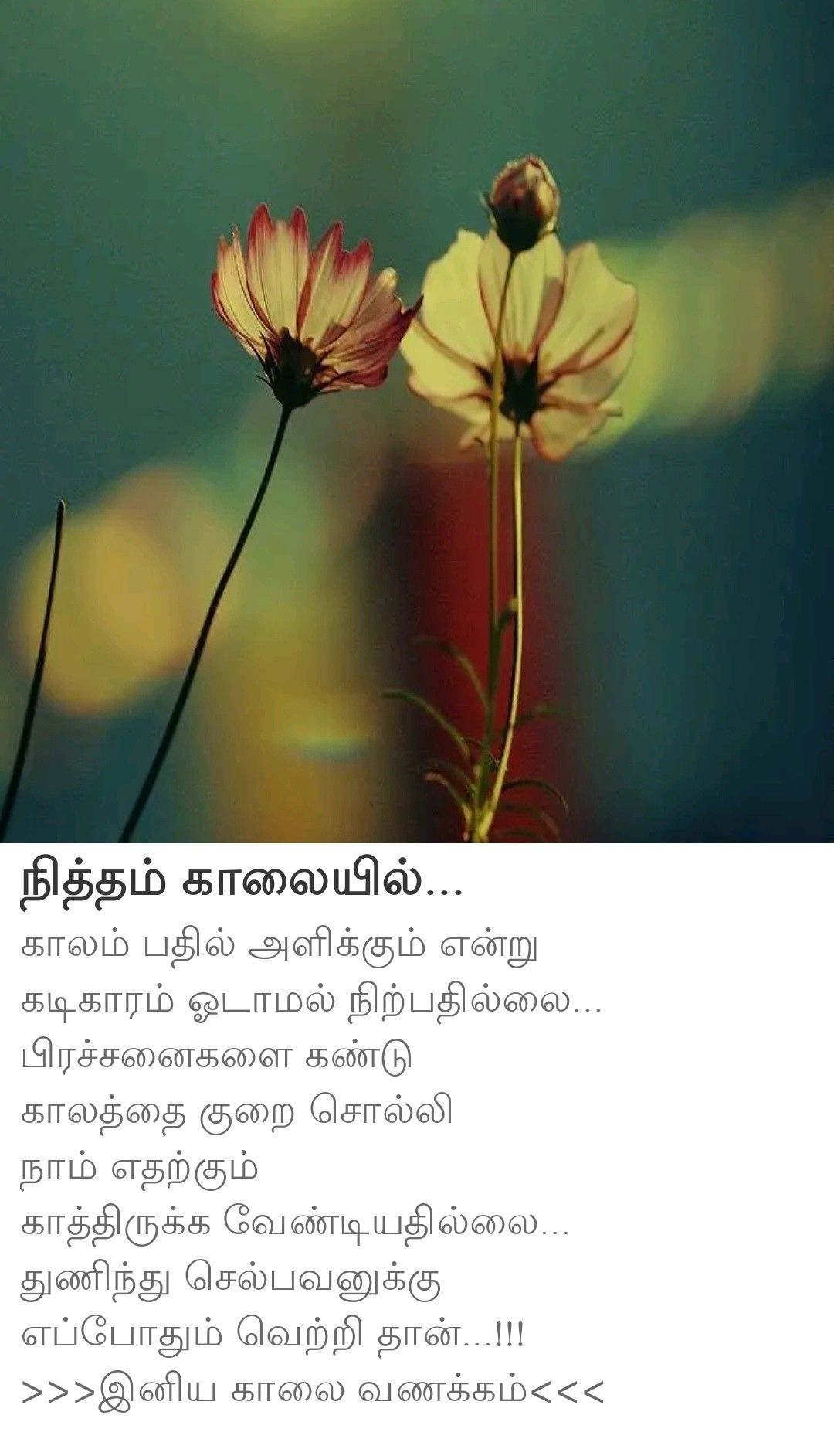 Pin By Ezhilchezhiyan On Wishes In 2020 Plants Dandelion Flowers
