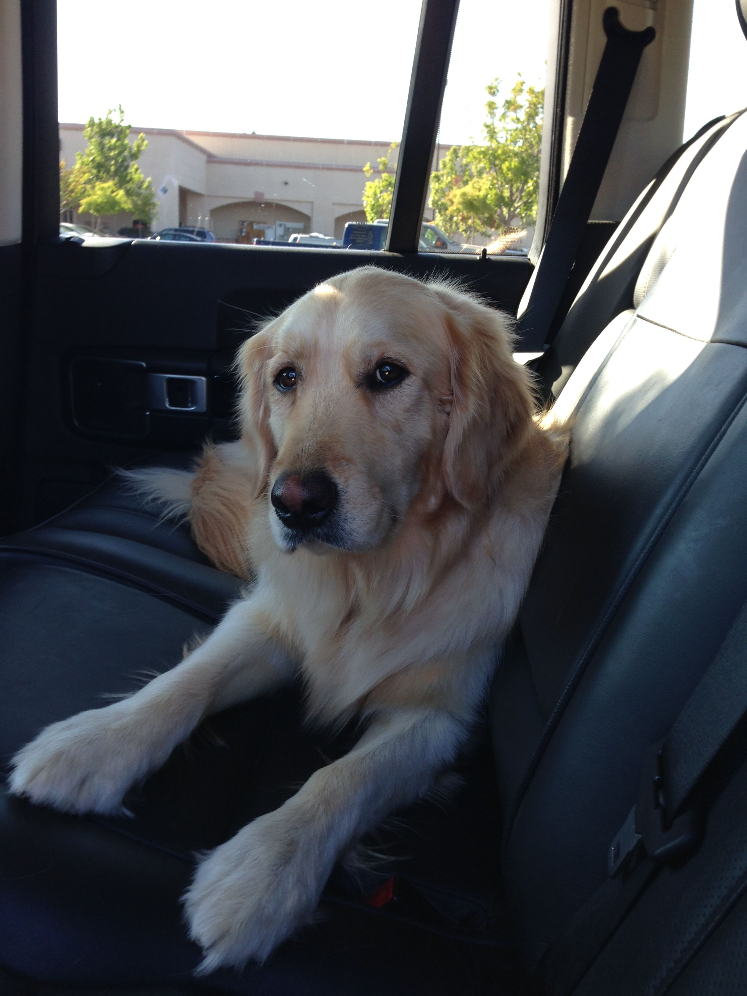 Pin By Mike On Golden Retriever My Now 4 Year Old Jackson All