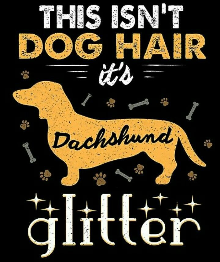 Dachshund dachshund dachshund dachshund breed