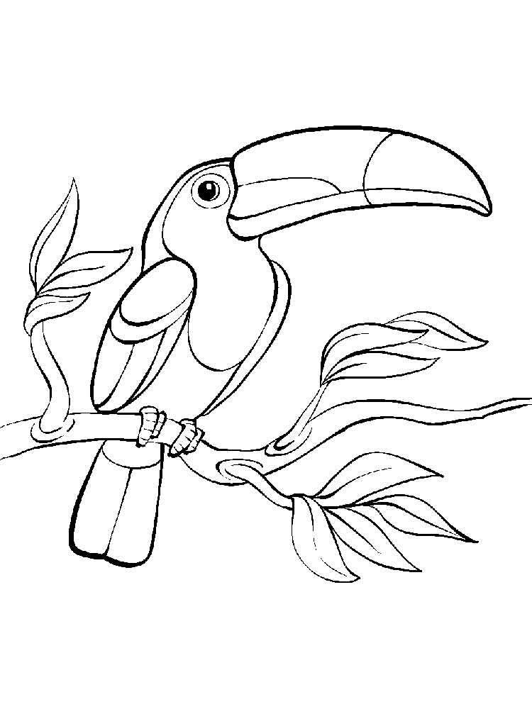 Resultado De Imagem Para Fotos De Tucanos Para Imprimir Com