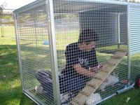 Rabbits enjoying their coop at the NSW RSPCA! Buy
