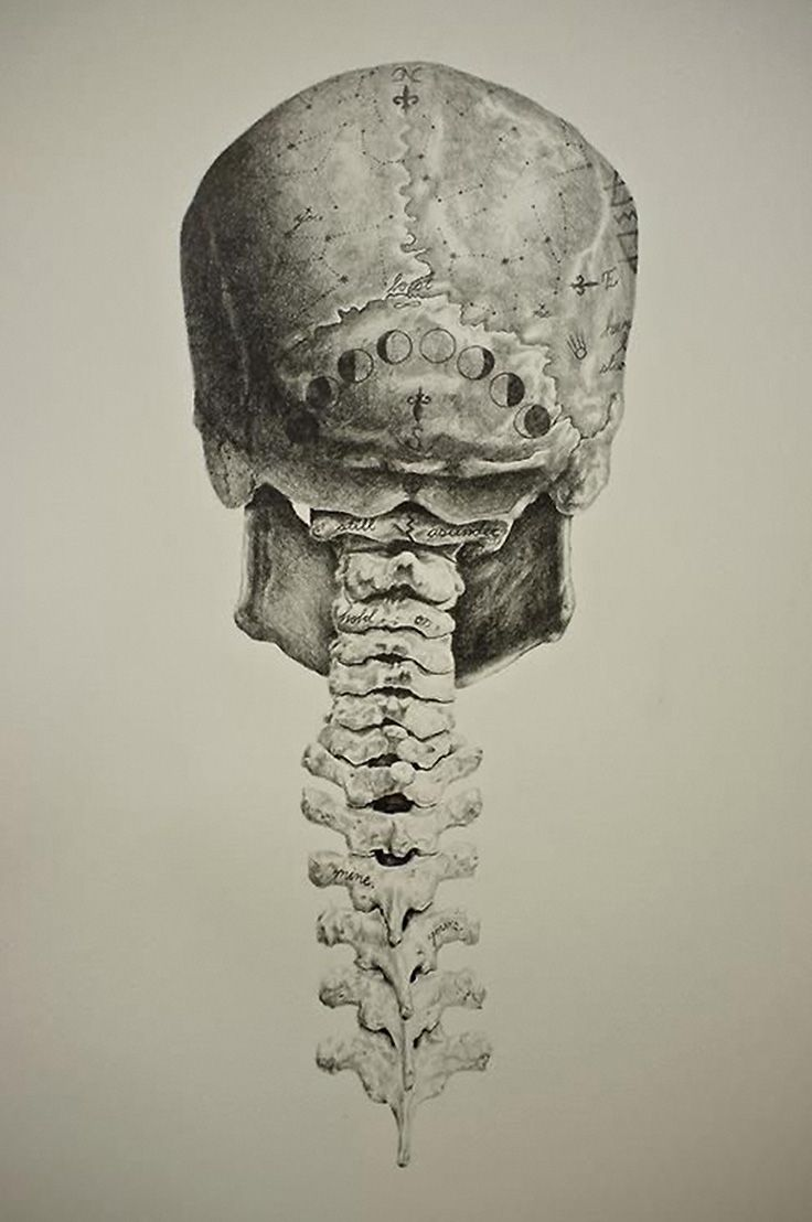 Human Skull Posterior And Cervical Spine Anatomy Drawing My Skull
