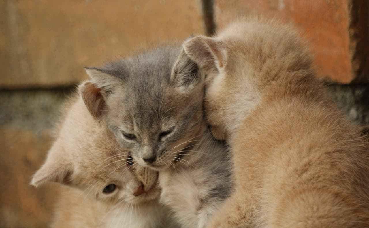 Cat Names A Z Cat Breeds 101 Cat Toilet Training Cat Breeds Cats