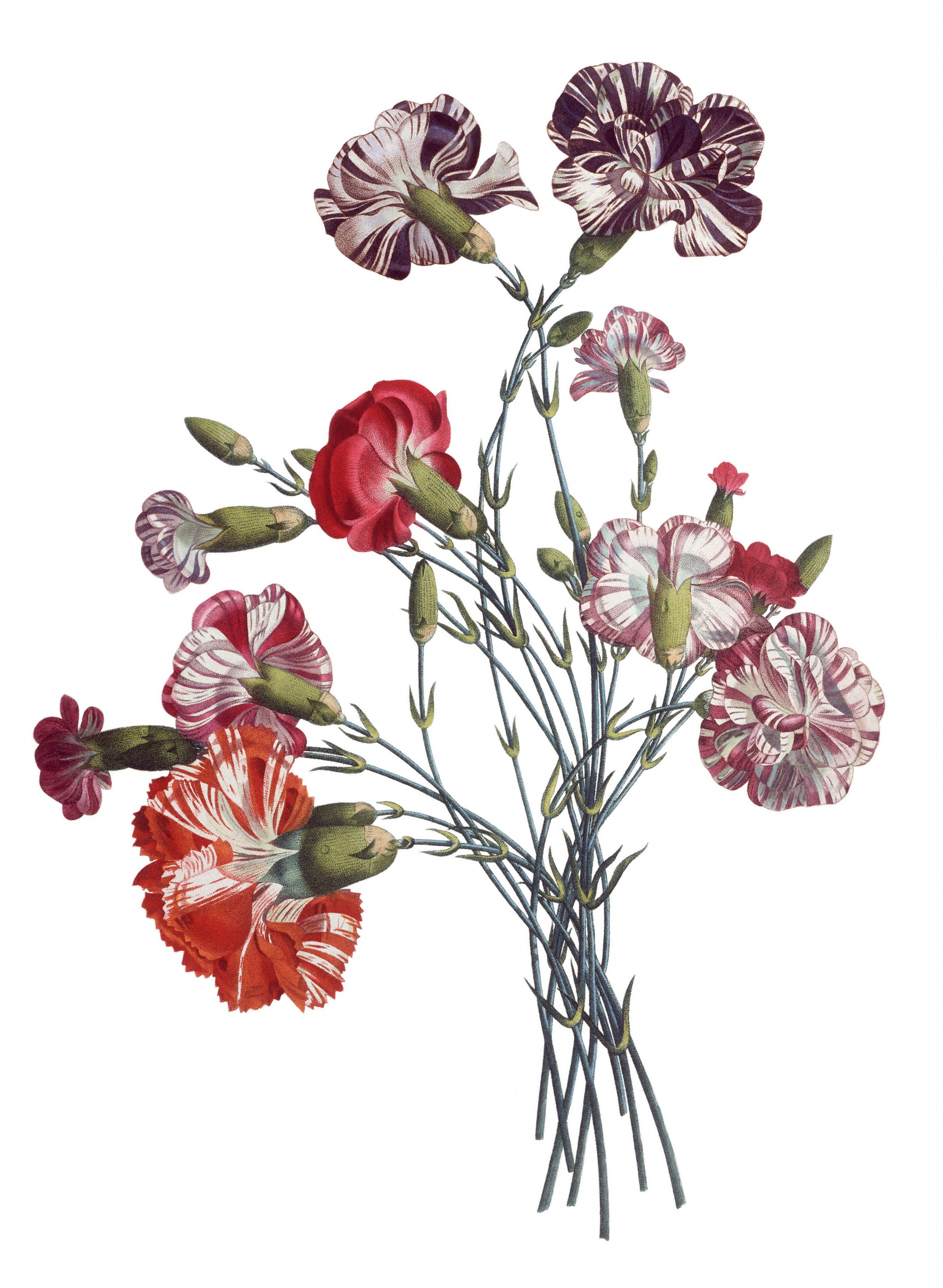 Vintage Flower Drawings 46