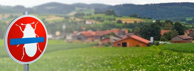 Kammerjäger Baden-Baden
