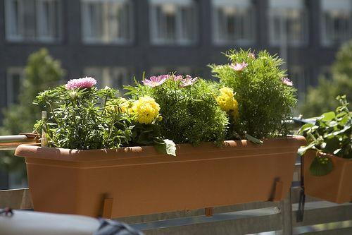 Breng kleur op je terras of balkon met zomers gevulde bloembakken of bloempotten.