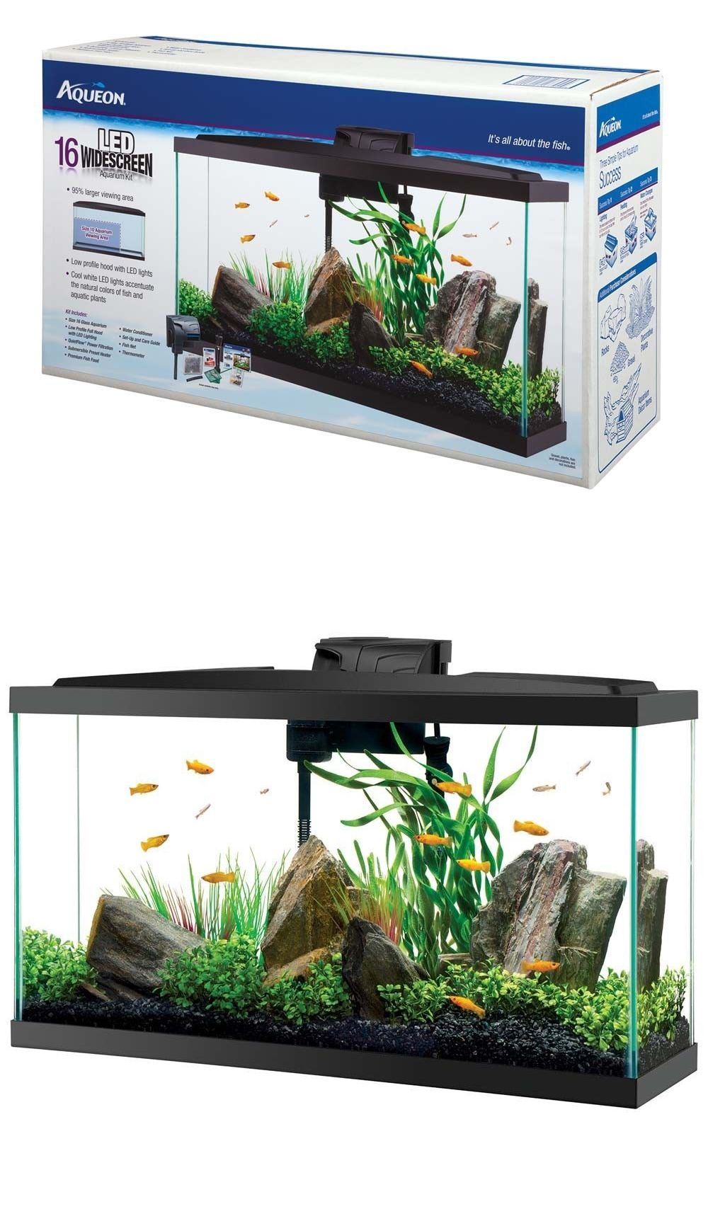 Freshwater aquarium fish buy - Aquarium Fish Tank