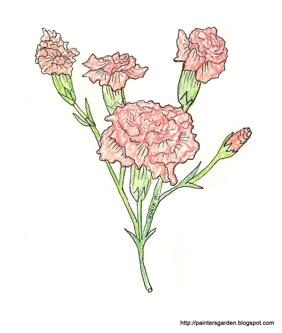 Paintersgarden Carnation Drawing Colored Pencil And Ink Carnation Drawing Drawings Colored Pencils
