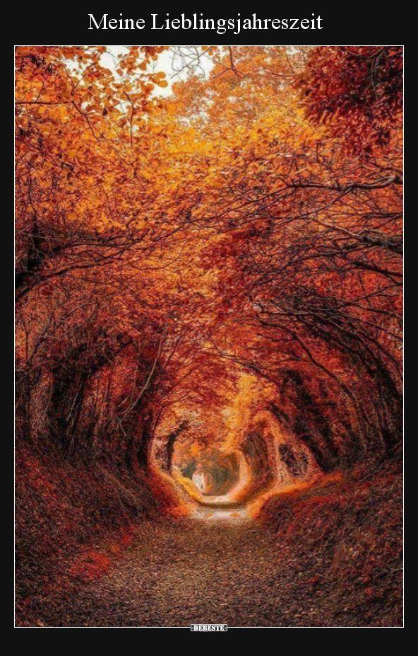 Meine Lieblingsjahreszeit.. | Lustige Bilder, Sprüche, Witze, echt lustig #autumnfoliage