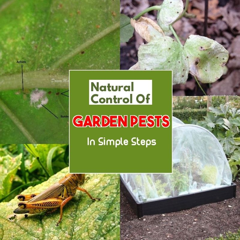 Safe and Effective Ways of Natural Pest Control Garden
