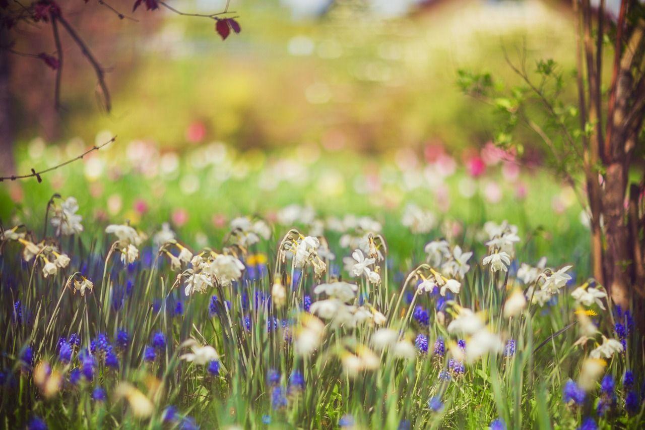 Spring flowers - #bokeh #flowers #garden #landscape #meolog #on #photographers #source #spring #tumblr