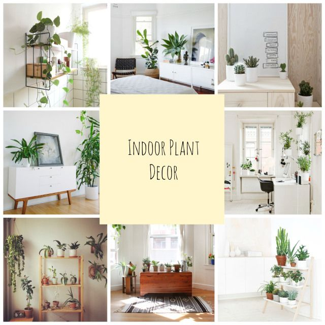 A Touch Of Green Indoor Plant Decor