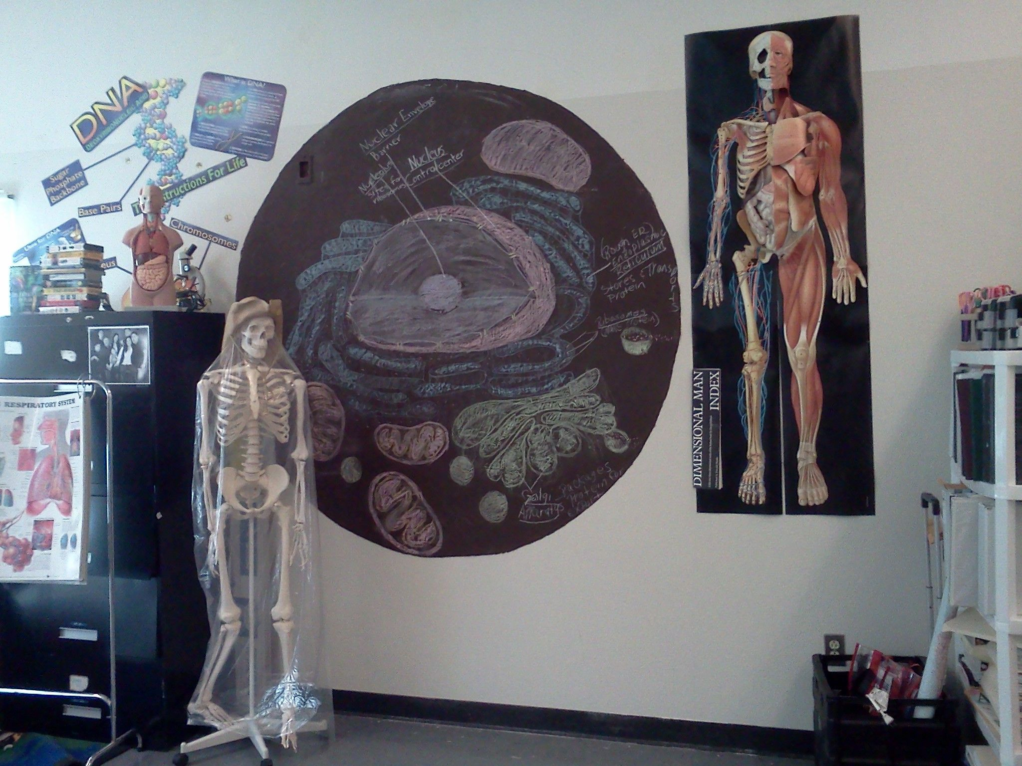 My Anatomy and Physiology classroom would look something like this ...
