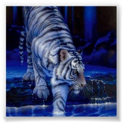Tiger Poster | Zazzle.com