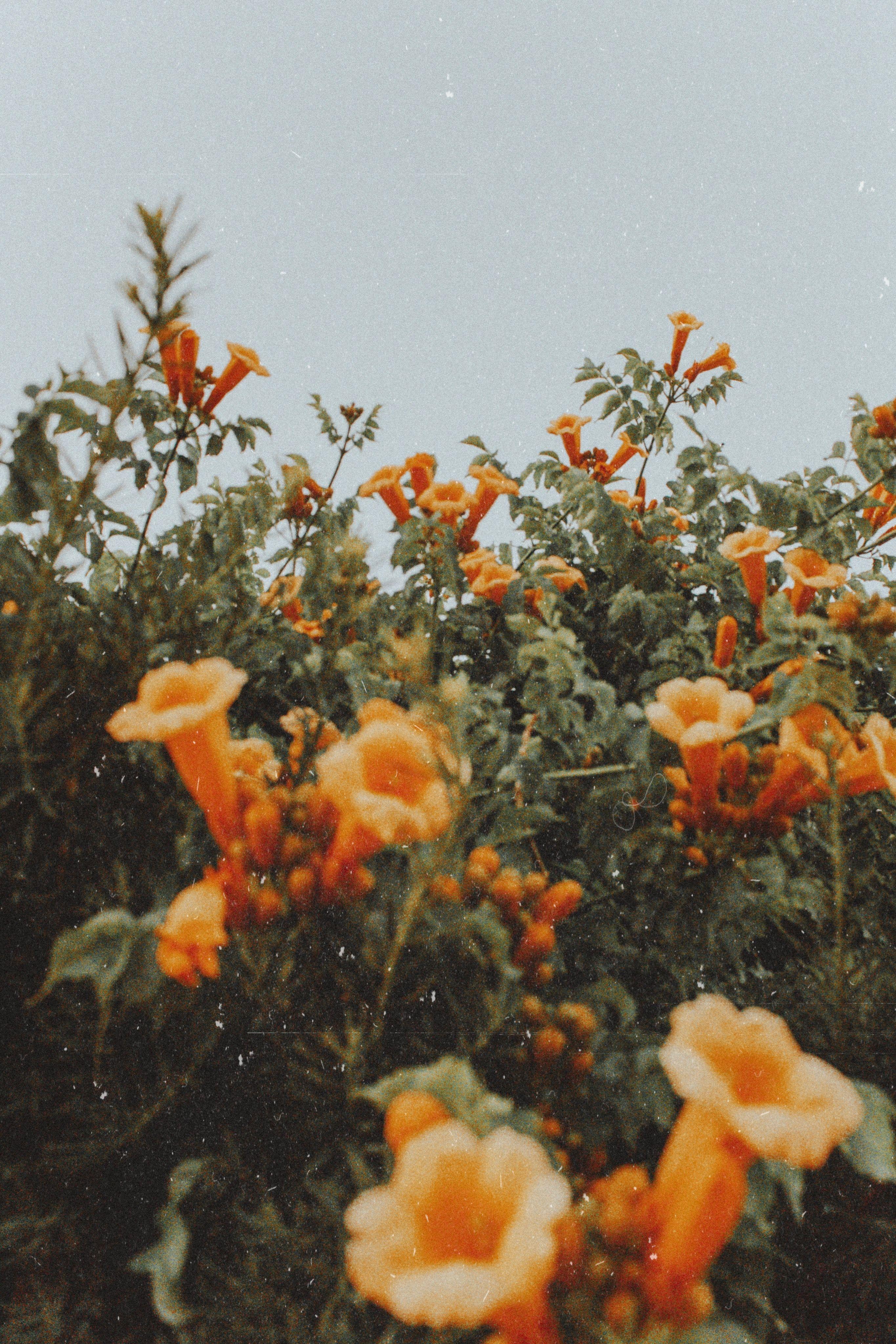 Pinterest Calsnic Instagram Calliensmith Flower