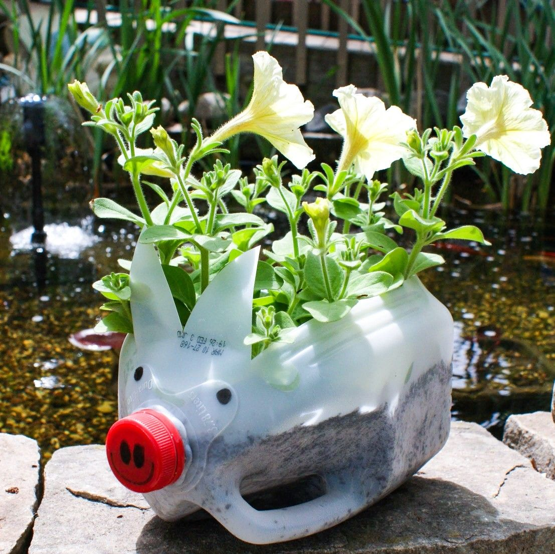 Reuse Empty Milk Jug Yellow Petunias Flowers In 2020