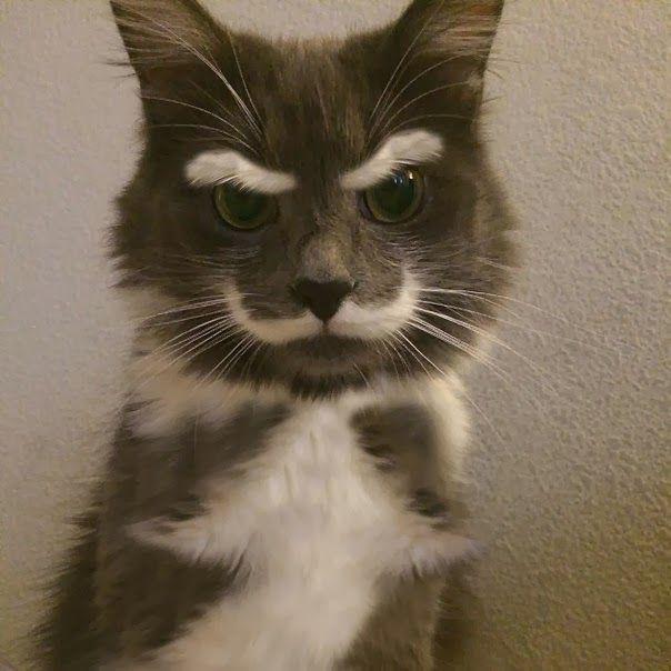 立派な眉毛とヒゲ持つ猫