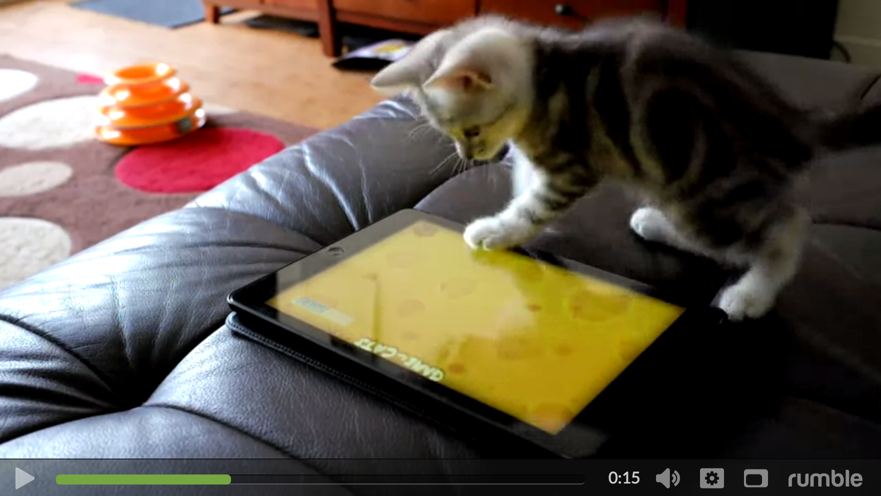 An adorable video of a cute kitten playing with an ipad.