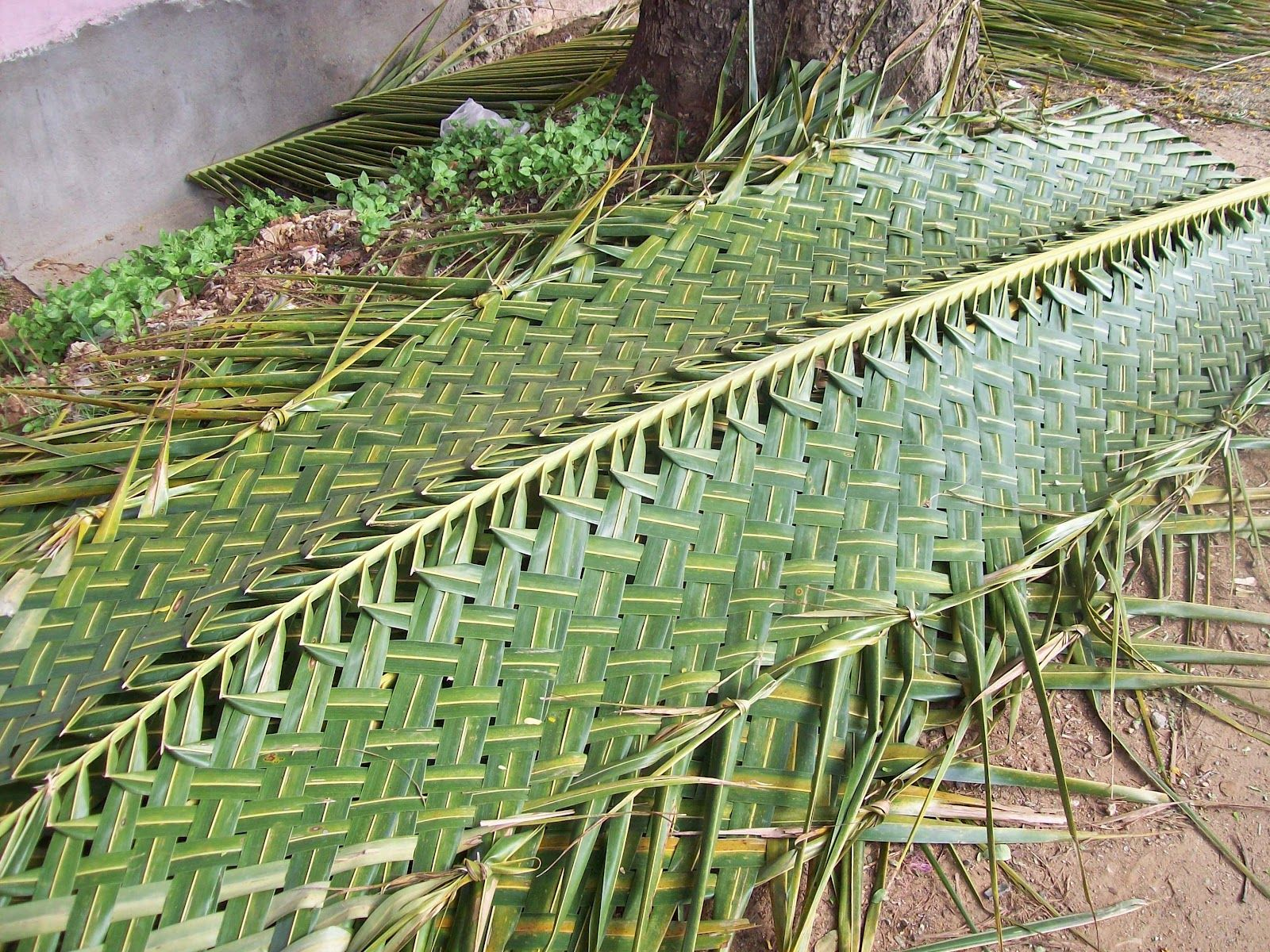 Thatched Roof Made From Real Palm Fronds Florida Palmtrees Tiki Hut Bamboo House Design Tiki